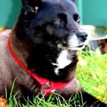 Bonnie † 27.11.2008